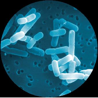 バクテリアセラピーを詳しく知る